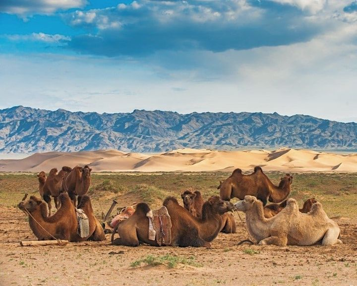 Vom Schwarzwald bis in die Steppen der Mongolei: Erlebt vom 15. - 23.1. die Nationalparkregion Schwarzwald mit ihren Camping- und Wohnmobilstellplätzen sowie abenteuerlichen Entdeckertouren. ??♀️ Lernt außerdem die Mongolei kennen: Unend...