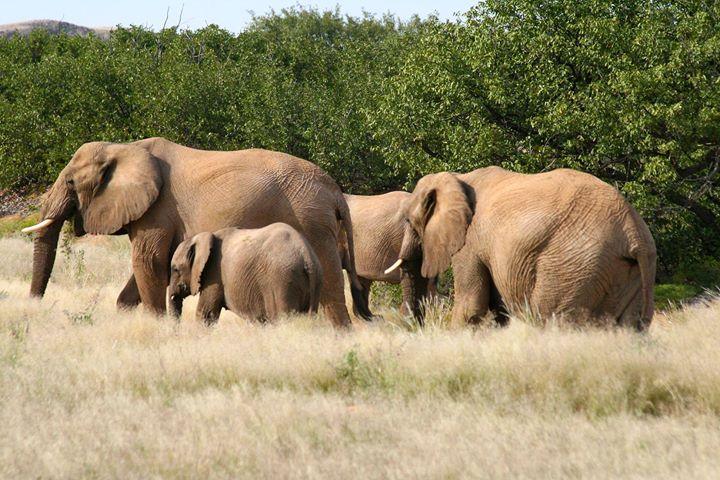 Endlose Weiten, wilde Natur und unberührte Landschaften - Namibia ist ein Land voller beeindruckender Naturschätze. Zum ersten Mal präsentiert sich Namibia. Luxus der Weite im kommenden Jahr bei uns auf der CMT - die Urlaubsmesse. Herzlich willkomme...