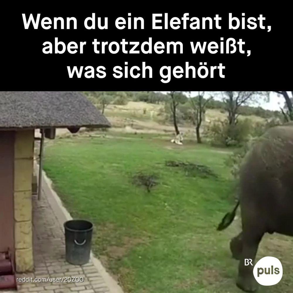Die Tierwelt macht's uns vor ??