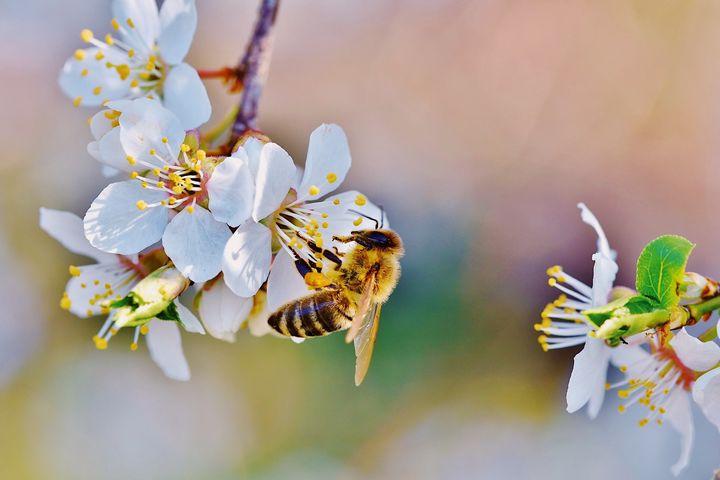 """Heute wird der Tag der Honigbiene gefeiert. ? Um auf die Bedeutsamkeit von Bienen aufmerksam zu machen, widmen wir der Biene eine eigene Ausstellung auf unserer GARTEN-Messe im Frühjahr 2021. ? Die """"Bienale"""" zeigt in Workshops & Vorträgen, was..."""