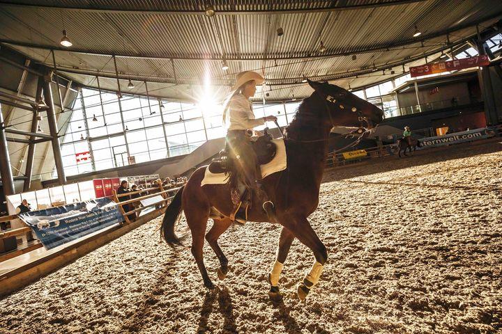Premiere auf der ANIMAL und Vorgeschmack auf die Reitsportmesse im Frühjahr: Das Reitsport-Outlet! ? Von Zügel und Sattel bis hin zu Futter und Streu - hier finden Pferdefreunde alles, was sie für sich und ihrem tierischen Liebling benötigen. ??...