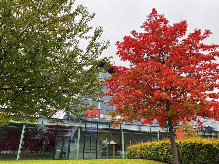 Bunte Grüße aus unserem Rothauspark. ?? Der Herbst ist nun auch auf unserem Messegelände angekommen - die Bäume verfärben sich in kräftigem Rot. ?  Wir wünschen euch ein schönes Wochenende! Was habt ihr vor?