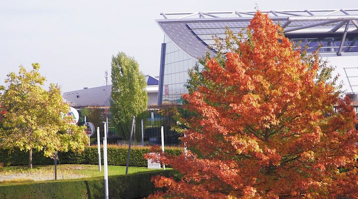 Wir wünschen euch mit diesem sonnigen Herbstbild aus unserem Rothauspark einen schönen Sonntag. ??? Genießt den Tag!