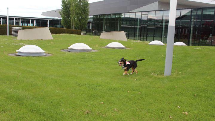 Am Wochenende hat die DRK Rettungshundestaffel Stuttgart unser Gelände ausgiebig zum Training ihrer schlauen Vierbeiner genutzt.? Wir freuen uns, dass wir hier unterstützen konnten und dass unsere Flächen für AusbilderInnen und Hunde vielfältig...