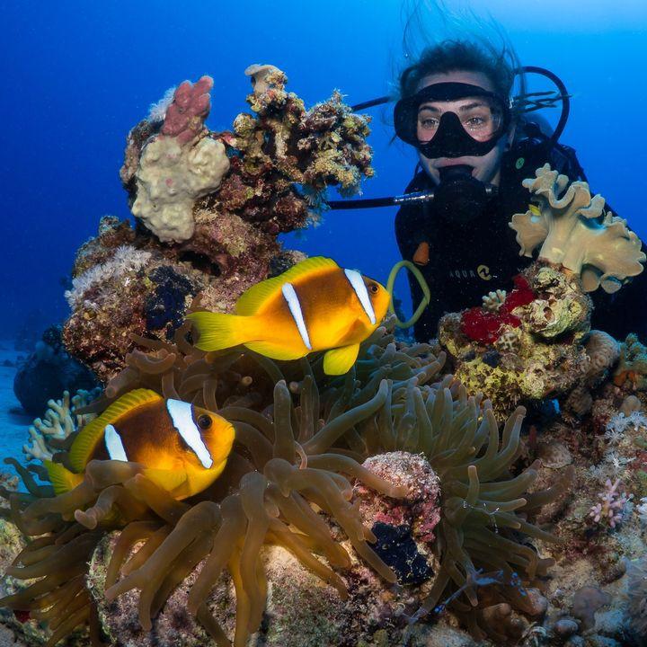 Unsere Urlaubsmessen inspirieren ab 2022 auch dazu, die Welt unter Wasser zu erkunden! ?? Mit der #InterDive erweitern wir das Angebot, um die Themenbereiche Tauchausrüstungen, Ausbildung, Technik, Destinationen und Spezialreisen sowie Meeressch...