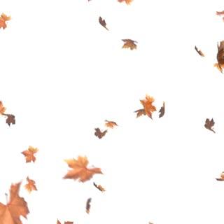 Wenn die Blätter an den Bäumen bunt werden, steigt bei uns die Vorfreude.??Denn dann steht der Stuttgarter MesseHerbst bald wieder vor der Tür.? Vom 18. - 21. November stehen bei der Familienmesse wieder Spaß, Emotionen und Mitmachen im Vo...
